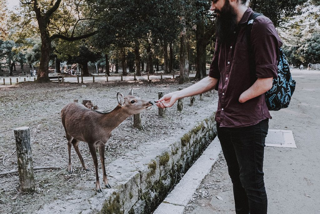 Nara Deer Park. Man feeding a deer.